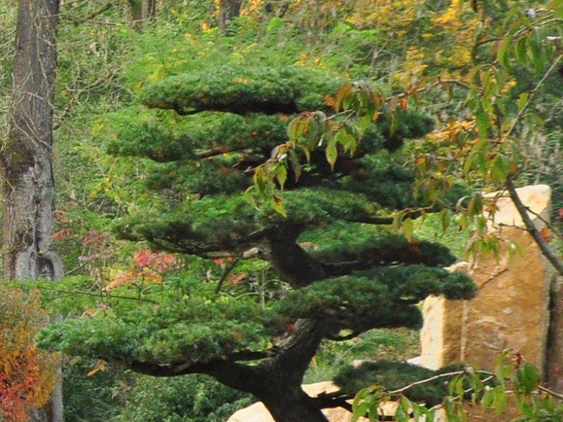 Am nagement de jardins et ext rieurs design morbihan arst l paysagiste - Plante pour jardin japonais ...
